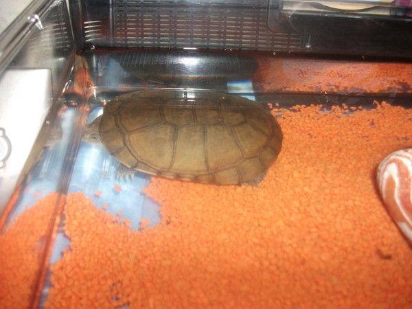 La mascotte de la maison for Avoir une tortue a la maison